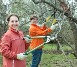 4 Pruning, Open up the Tree Canopy during the Dormant Season, SIR Program
