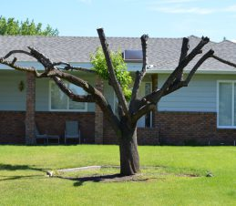 Hard Pruned Residential Tree, SIR Program