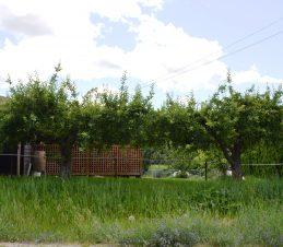 Residential Apple Trees